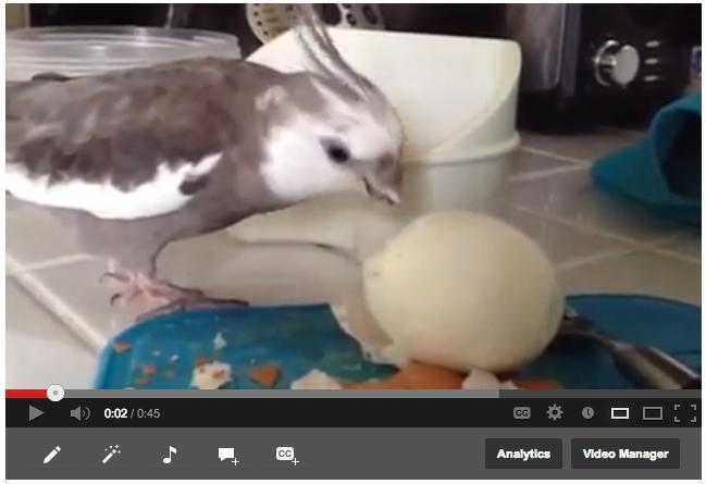BirdEnjoysWholeEgg
