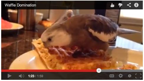 WaffleDomination