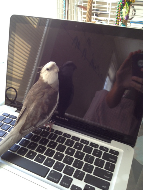 "This move is entitled ""laptop, you are as pretty as a grey and white cockatiel!"""