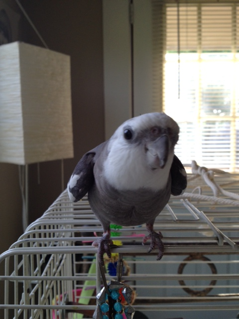 I must say, this late afternoon light really is ideal for playing up the color contrast between my white and grey feathers.
