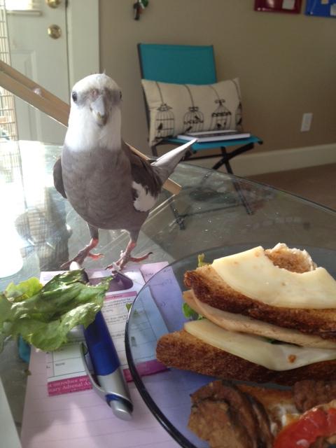 Oh! A lovely veggie club sandwich!