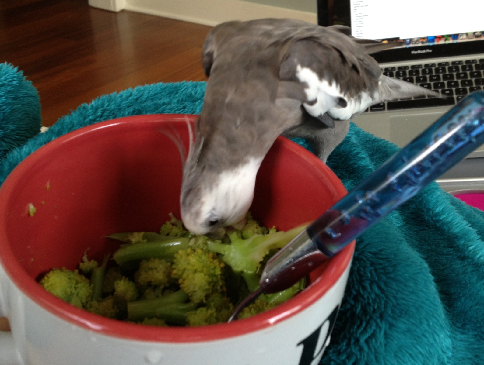 Broccoli in a bowl! My favorite!