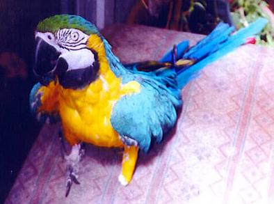 Cute parrot.