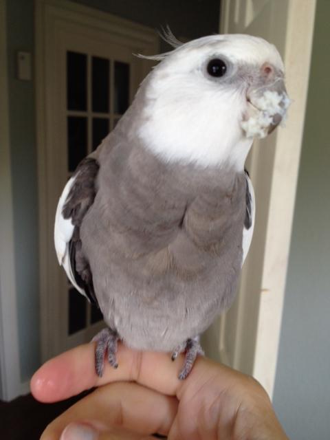 Beak buildup - profile view.