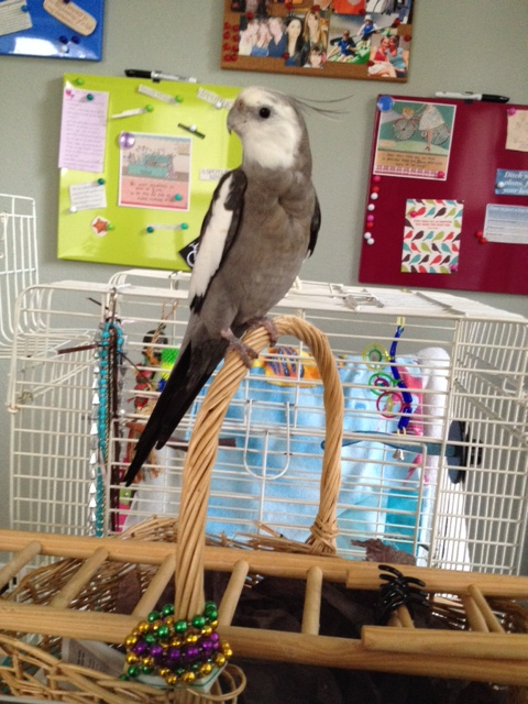 I have feathers. Check. I am small and cute. Check. I am very loud. Check. I must be Mom's supervisor! Coooool.