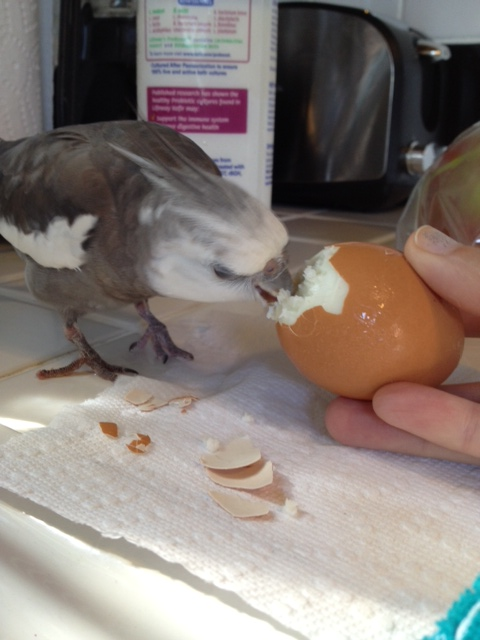 I'm glad she finally got my hint to stop trying to peel. She was interfering with my meal.