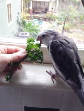 Oh....wait a minute....is that....KALE!