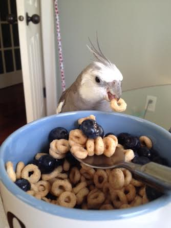 Mom is right there, but she's so taken with my cuteness she doesn't even notice I'm pilfering a Cheerio.