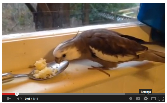 Pearl Eats Couscous Out of a Spoon