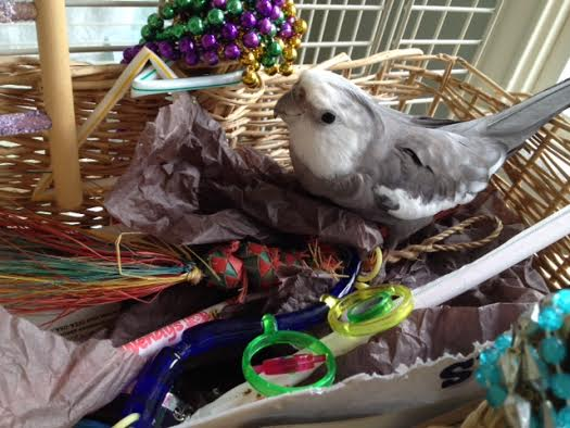 No wonder Mom gets jealous. Maybe I should lend her some of my feathers the next time I molt so she'll feel prettier.