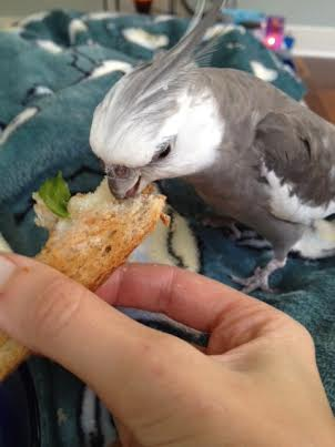 """5-star service (otherwise known as """"the sandwich comes to you."""")"""