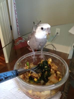 I can see my large featherless flock mate eyeing this dish, but I will stand in front of it to let her know it is mine.