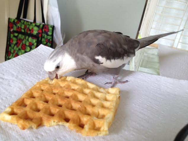 "Finding the delicacy acceptable, he delivers his signature predatory move, the ""bite o' death."""