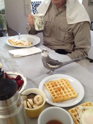 Oh that's good, Mom, be sure you get a good shot of me and my waffle!
