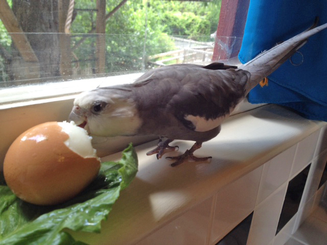 """Now I will subject the dish to my toughest test, the """"full beak immersion."""""""