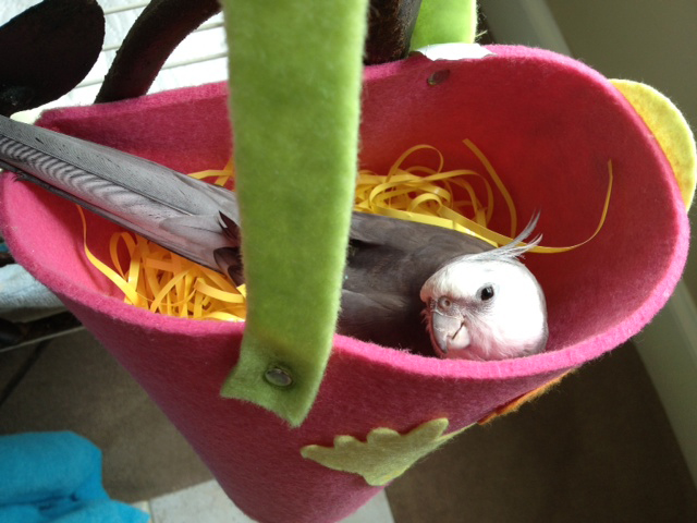 "Here, a very cute parrot poses in his ""manly manbird"" nest."
