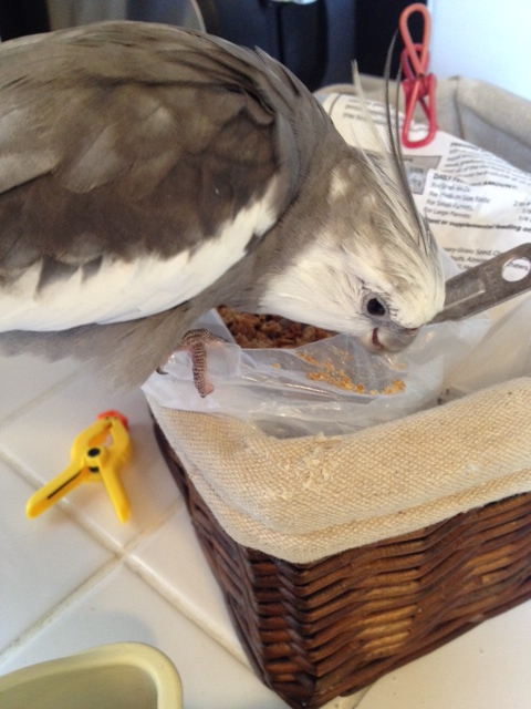 """As you dine in your shallow emergency """"shelf bowl,"""" always keep one eye on the dish and one eye on the decoy bowl."""
