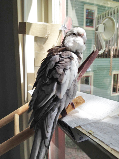 """It's time for my daily """"maximum prettiness"""" preening session."""