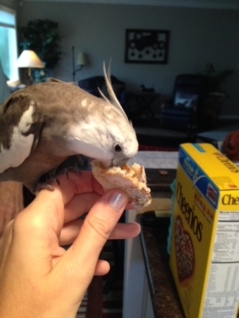 "First I will perform my patented ""full beak immersion"" test."