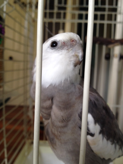 Look - here is an activity now! Here I am looking very cute in my cage (be sure to write that down, okay?)