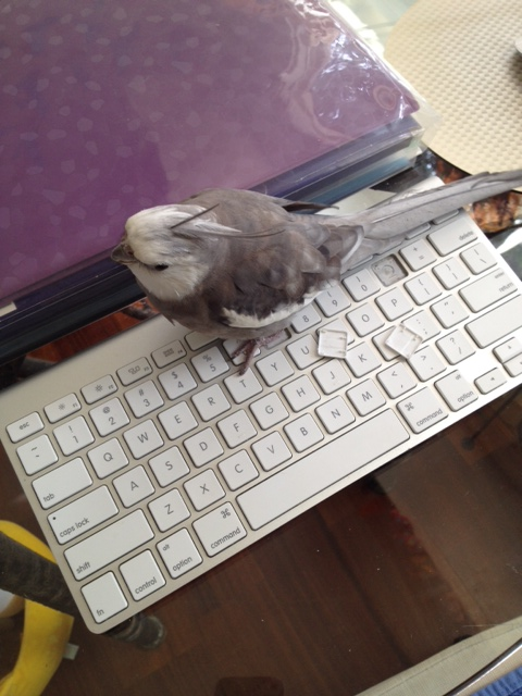 """My large featherless assistant thinks I can't see her over there waiting on that small shelled being. I'll just let her know this """"shared service"""" is unacceptable."""