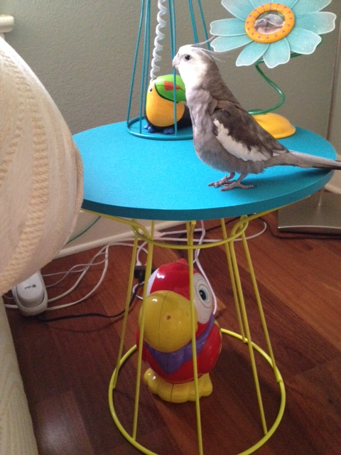 Oh heck - where is my large featherless assistant when I need her?