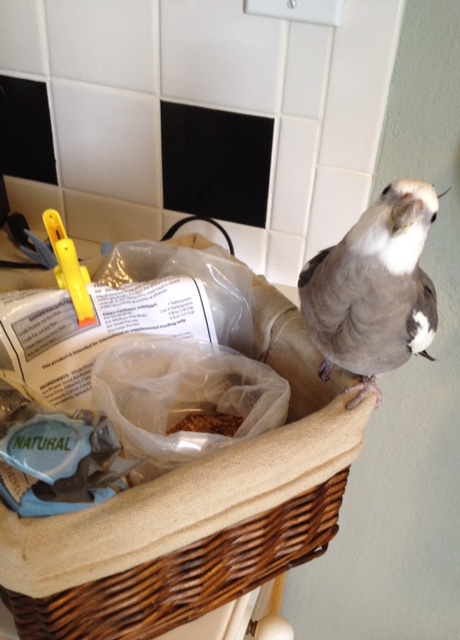 """Here, the photogenic and famous celebrity spokes bird introduces his signature charity event, the """"Food Bowl Lunge Challenge."""""""