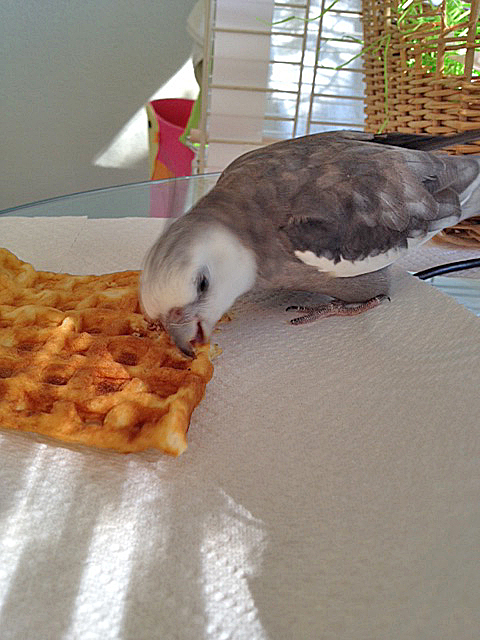 """The """"tiny nibble taste test"""" aims to sample for consistency across the waffle."""