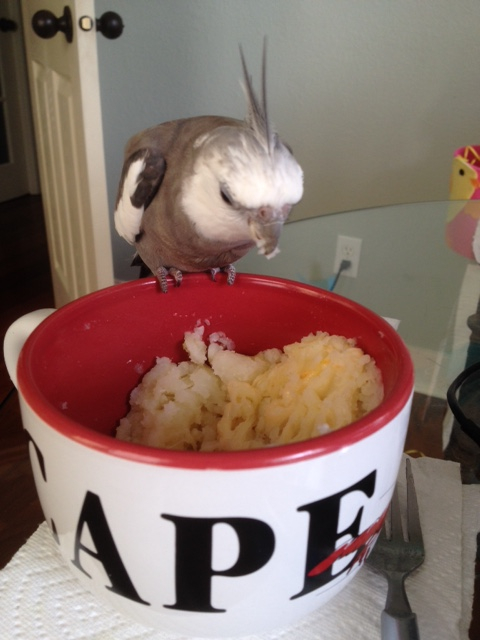 Well look what we have here! Delicious mashed potatoes - all for me!