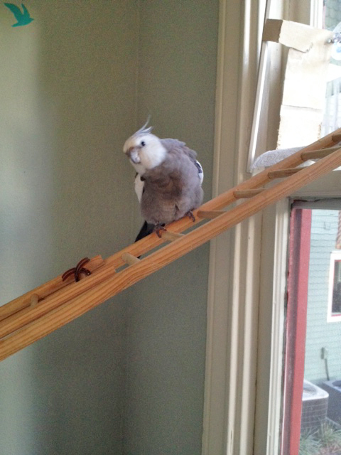 """Okay, Mom, it's almost time for the next """"aerial nest twirling"""" show. Get the camera ready!"""