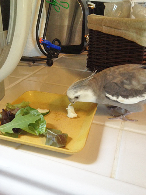 "This is the small shelled flock member's dish - I'll just take my ""alpha"" share now and then my assistant can feed her."