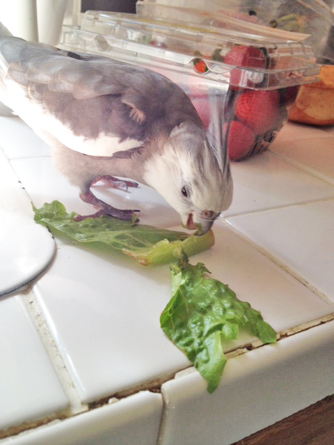 """He permits his featherless press secretary to take one final shot of """"prey consumption"""" - as a gift to newer predators learning Gladiator skills."""