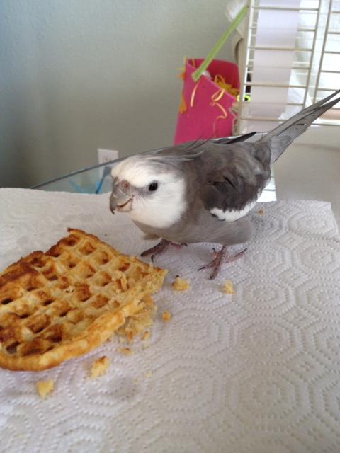 "I call this design ""interpretive waffle."""
