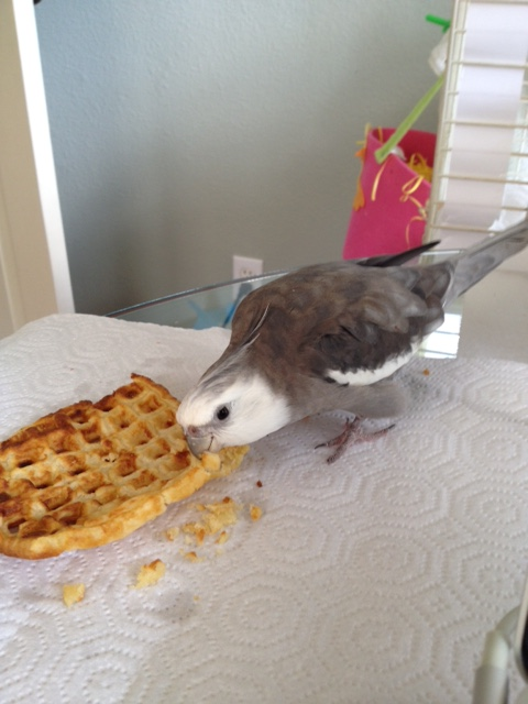 """Okay, Mom. Mom? We can start the photo shoot. Let's call this one """"Bird Consumes Waffle."""""""