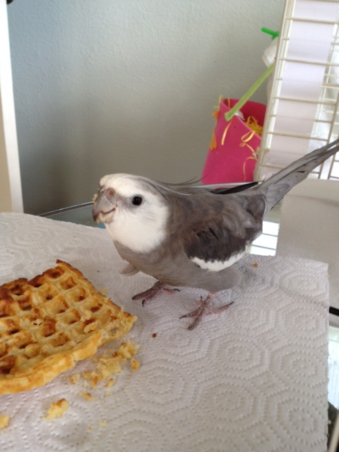 """And for the photo shoot finale - """"Cute Bird....with Waffle."""""""