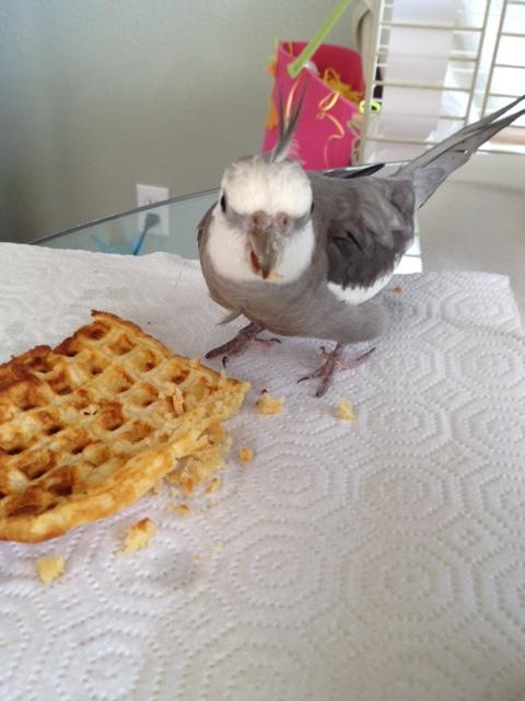"""We'll call this one """"Ferocious Bird, Crunchy Waffle."""""""