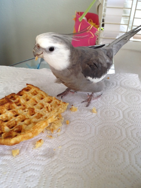 """Let's call this one """"Bird With Waffle."""""""