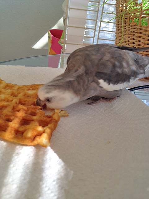 Here, the expert uses cere, feathers, tongue, beak, eyes, and ears to detect the singular signature of the waffle's chef.