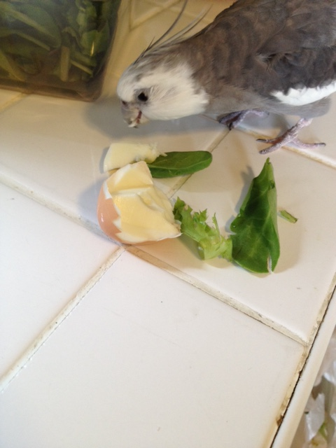 """What a perfect """"extraction disguise"""" - egg on a bed of greens. No one will even know you're gone!"""