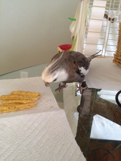 """All right - I'll initiate the standard """"snack security"""" protocols."""
