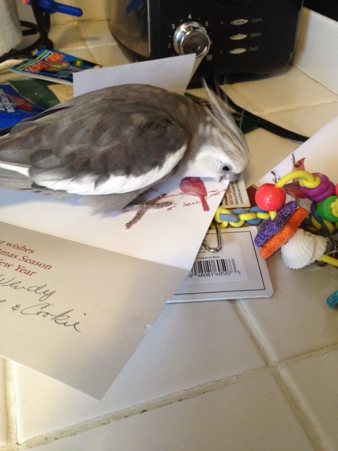 """This thick paper is extra scrumptious....has a great """"beak feel"""" (a technical term)."""
