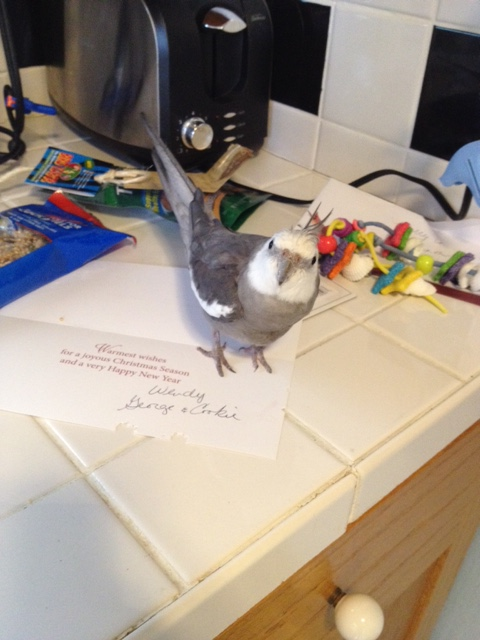 Awwww! Feathery signatures on the card! Mom, please thank the feathered ones and their large featherless wrapping assistant for me!