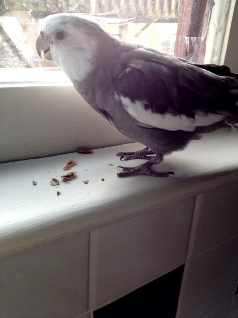 Now let's see. Where oh where could the gourmet seeds have gone?