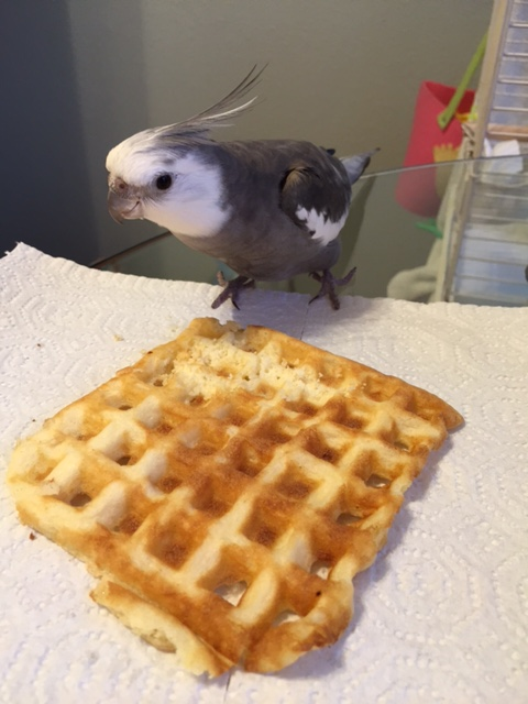 Hello. This waffle's taken. T.A.K.E.N. Now is a good time to back away.