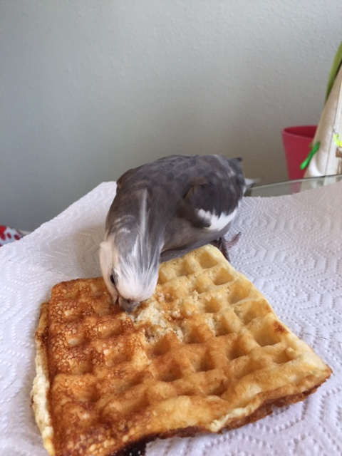 When you can kill your own waffle, Mom, you can share mine.