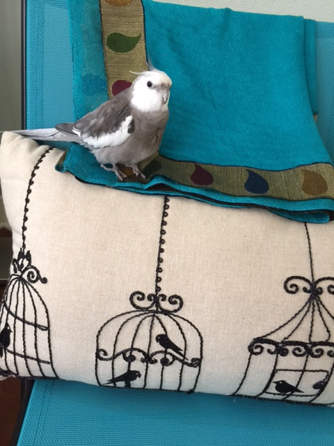 "Today we will talk about how wonderful life is when you are an ""out of cage"" feathered being."