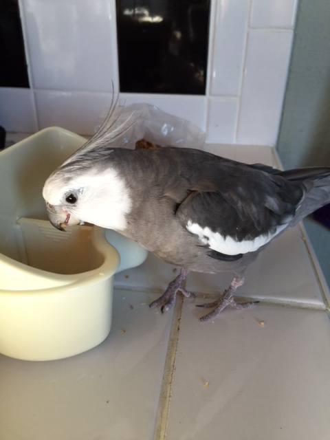 Well, hello there! How are you today? My name is Pearl. I'm a parrot. I'm feeling very hungry.