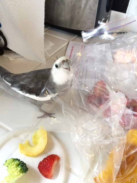 """I verified the one called """"salmon,"""" Mom, but this character looks very suspicious!"""