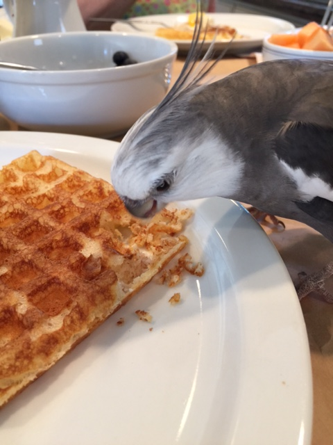 Oh, that's right - Waffle, I love you so much!