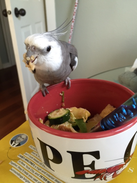 """Finally, this surefire tactic is called the """"You Want Some of This?!"""" Load as much of the dish onto your beak as possible while glaring fiercely. When the poacher finishes cowering in fear, they will quickly depart."""
